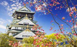 קרוז ביפן